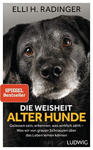 Die Weisheit alter Hunde: Gelassen sein, erkennen, was wirklich zählt – Was wir von grauen Schnauzen über das Leben lernen können - 1