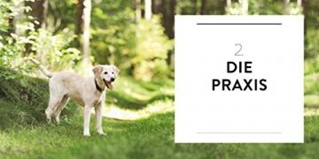 So einfach geht Hundeerziehung: Von der Bestseller-Autorin – Auf einen Blick: Illustrationen zeigen Schritt für Schritt, was wirklich wichtig ist (GU Tier Spezial) - 8